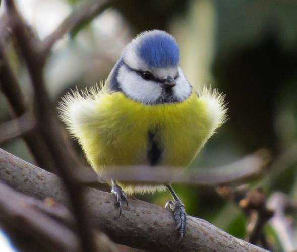 Morgenexkursion mit dem Natur- und Vogelschutzverein